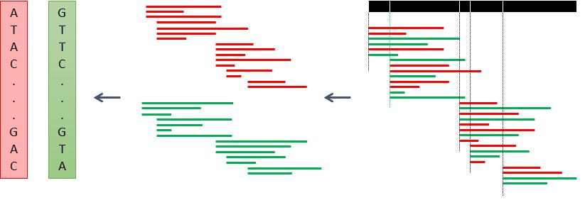 Tesi: Euristiche applicate all'assemblaggio diaplotipi